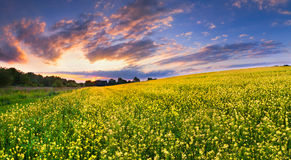 Colorful landscape of blossom rape Stock Images