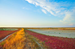 Colorful landscape Royalty Free Stock Photos
