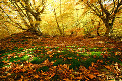 Colorful landscape, the green cover of moss with yellow leaves Stock Photography