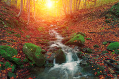 Amazing autumn landscape in the mountains, sunrise mountains scene in the forest, amazing background landscape, beauty world royalty free stock image