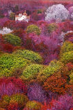 Colorful Landscape. Colorful Mystical Landscape with green purple orange and white trees Stock Photography