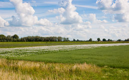 Colorful landscape in the Netherlands. A landscape of colorful fields and a blue sky with clouds Royalty Free Stock Images