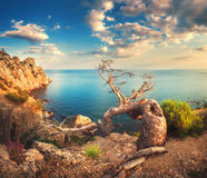 Colorful landscape with old tree, mountains, cloudy sky and blue sea Royalty Free Stock Photo