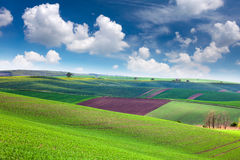 Colorful Landscape of spring fields background Stock Photography