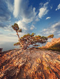 Colorful landscape. Sunrise in mountains with old tree. Sunny mo Stock Photo
