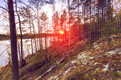 Colorful landscape at sunset sunlight. Colorful landscape with granite slope and pine trees at sunset light. Karelia Republic, Russia Stock Photography