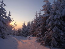 Colorful landscape at the winter sunrise in the mountain forest Royalty Free Stock Photos