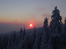 Colorful landscape at the winter sunrise in the mountain forest Royalty Free Stock Images
