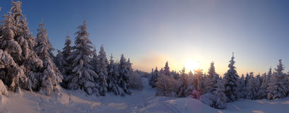 Colorful landscape at the winter sunrise in the mountain forest Stock Images