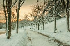 Colorful landscape at the winter sunrise in park. Landscape at the winter sunrise in park royalty free stock photo