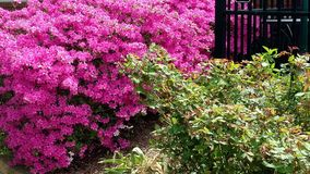 Colorful landscaping Stock Image