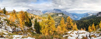 Colorful larch trees with mountains and lake. National Park Berchtesgaden. Stock Photo