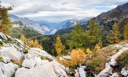 Colorful larch trees with mountains and lake. National Park Berchtesgaden. Stock Photos