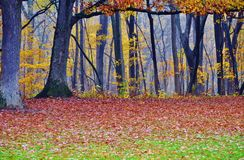 Colorful late autumn forest. Royalty Free Stock Image