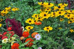 Colorful late summer garden Stock Image