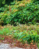 Colorful layers of vines and tree leaves along the country road Royalty Free Stock Images