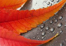 Colorful leaf Royalty Free Stock Photos