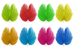 Colorful leaf Stock Photos
