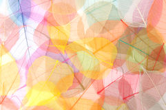 Colorful Leaf Background Stock Photography
