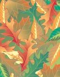 Colorful Leaf Background Stock Image