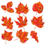 Colorful leaf background, eps10 vector Stock Images