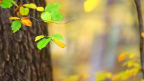 Colorful leaf background in forest Stock Images