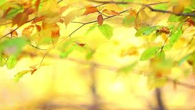 Colorful leaf background with forest Royalty Free Stock Photography