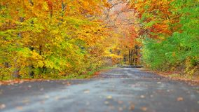 Colorful leaf background in forest near the road