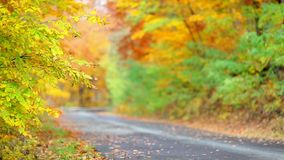 Colorful leaf background in forest near the road stock video footage