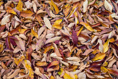 Colorful Leaf Background royalty free stock images