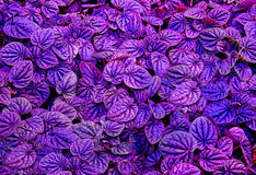 Colorful of leaf Royalty Free Stock Images