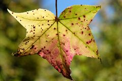 Colorful Leaf Royalty Free Stock Photography