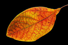 Colorful leaf on black Royalty Free Stock Photography
