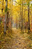 Colorful leaf covered trail in park during autumn. Vertical stock photo