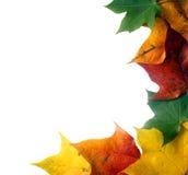 Colorful leaf frame stock photos