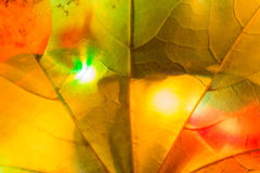 colorful leaf garland Stock Image