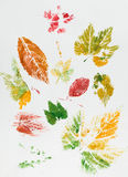 Colorful leaf imprint Royalty Free Stock Images