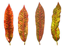 Colorful leaf isolated on white background Stock Images