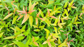 Colorful leaf pattern, Selective focus applied. Stock Photos