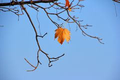 A colorful leaf sprig Stock Images