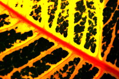 Colorful Leaf Texture Stock Photo