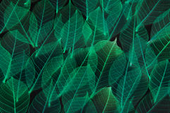 Colorful leaf texture Stock Photos
