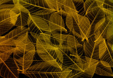 Colorful leaf texture Stock Image
