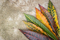 Colorful leaf texture Royalty Free Stock Photography