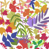 Colorful leafs Stock Image