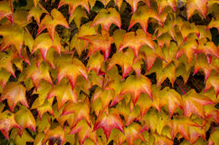 Colorful leafs on the house Royalty Free Stock Photos