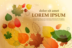Colorful leafs with sample text. Autumn floral background. Vector Stock Image
