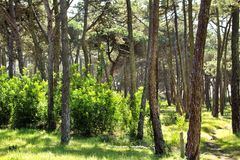 Colorful and leafy pine forest in the mountain stock photos