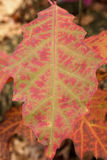 Colorful leave Stock Photography