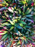 Colorful leave Royalty Free Stock Images